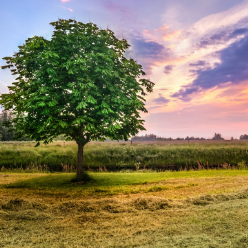 Tips for Making Your Vacant Land Easier to Sell